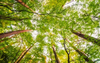 Sustainable forest management, a central element in the value chain of paper bags