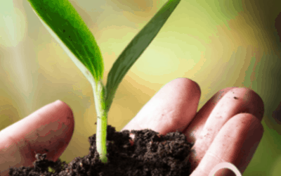 White Paper – How to enhance your brand value and do good for the environment